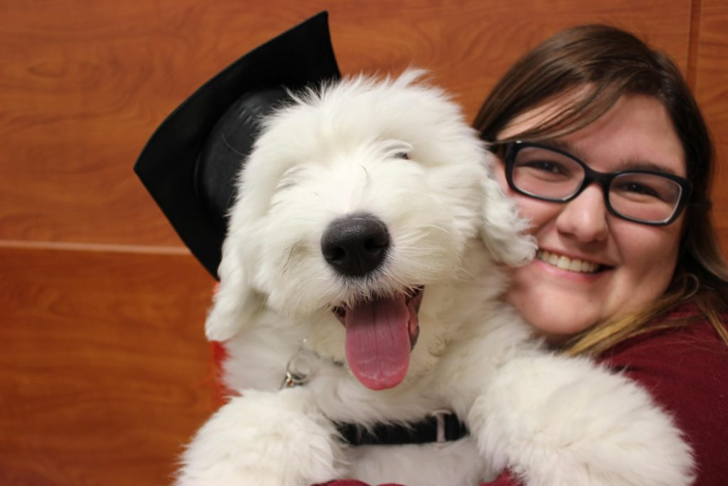 Agnes, an Old English Sheepdog, wearing a black graduation cap, being held by her mother.